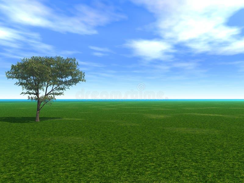 空的槭树 库存例证