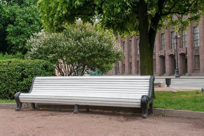 空的白色木庭院长凳在开花的树下在城市公园 放松的地方的概念 免版税库存照片