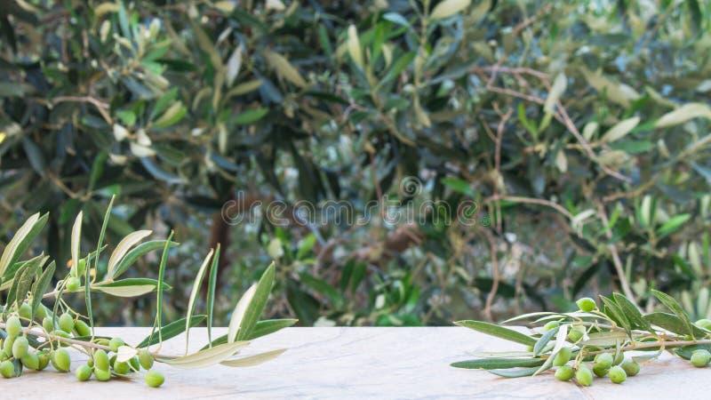 空的石桌有与一个室外题材的被弄脏的橄榄树背景 库存照片