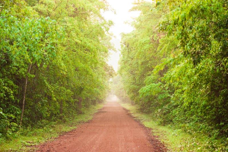 空的红色土路风景在热带森林,在早晨薄雾的茂盛植物,阳光在一条长的平直的土路发光 免版税库存图片