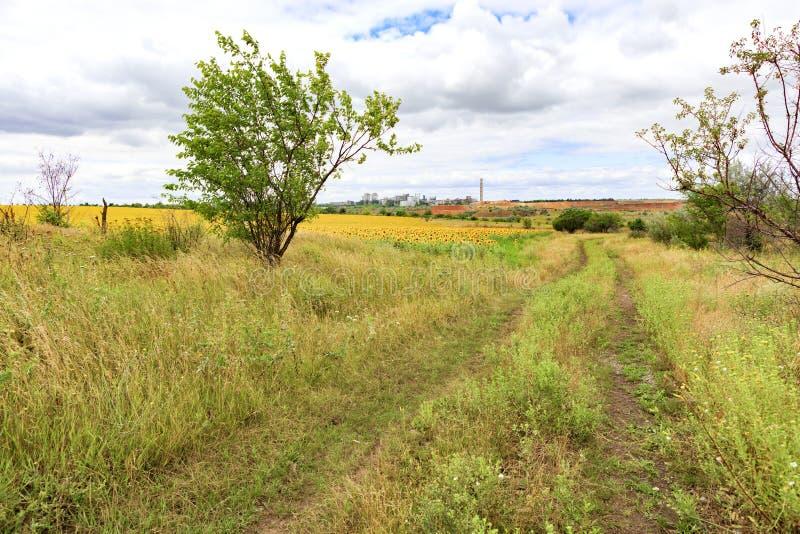 空的路农村风景在向日葵领域附近的夏日 免版税图库摄影