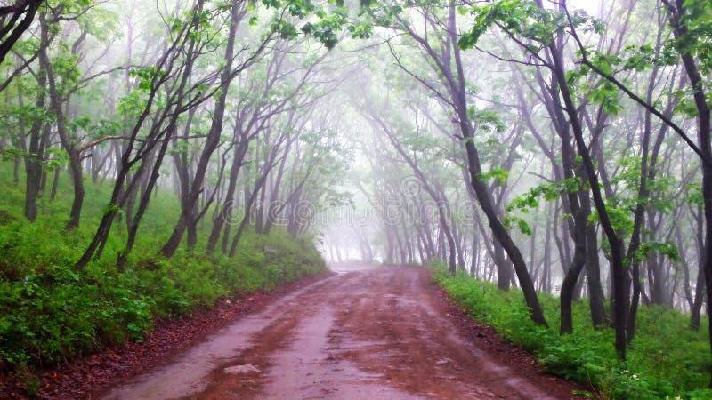 空的路在有雾的森林,早晨和新鲜里 免版税库存图片