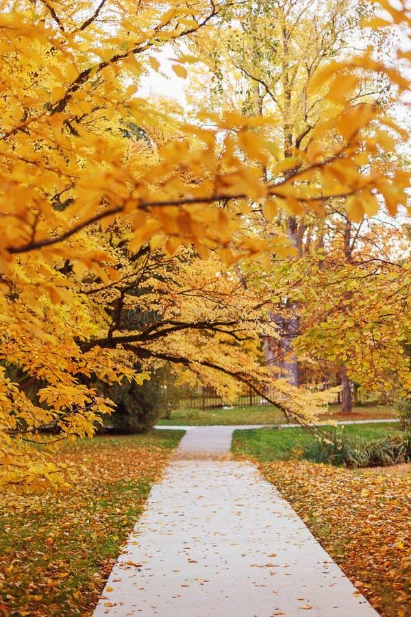 空的路在秋天公园 免版税库存照片