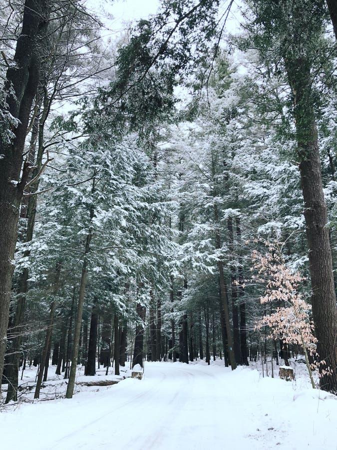 空的路审阅森林 免版税库存图片