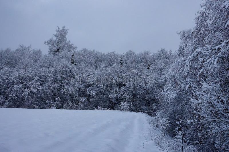 空的领域和森林角落 图库摄影