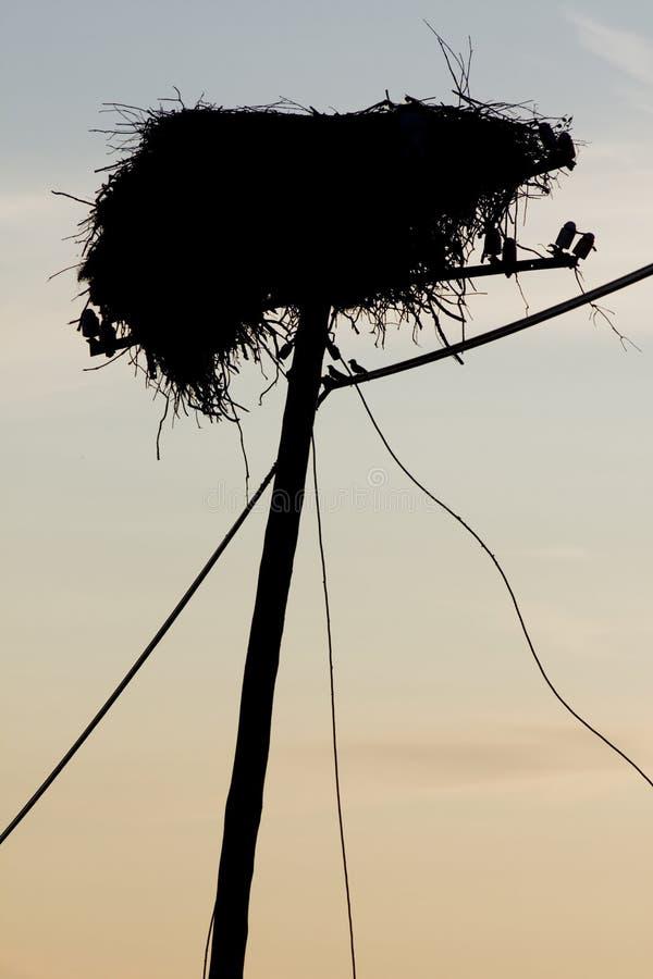 空的鹳巢 免版税库存照片