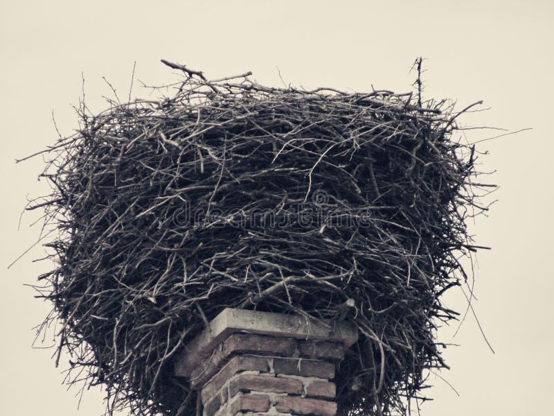 空的鹳巢 免版税库存图片