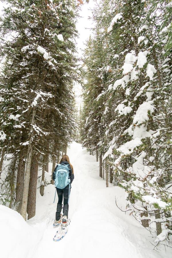 穿上鞋子在足迹的徒步旅行者雪 免版税库存照片