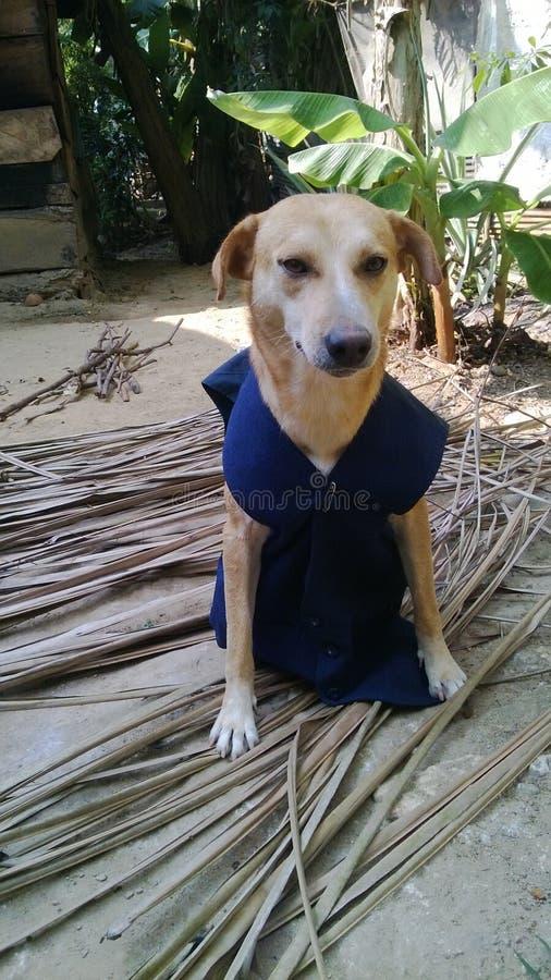 穿夹克的骄傲的狗 免版税库存图片