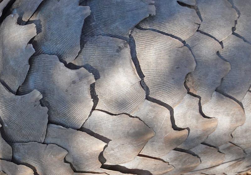 穿山甲皮肤和被轰击的外部细节的宏观图象  库存照片