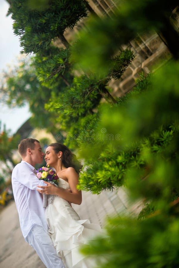 穿戴了亲吻一个美丽的新娘的新郎在白色 亲吻在绿色植物中间的婚礼夫妇在公园 图库摄影