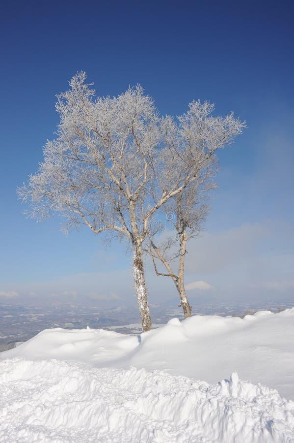穿的ho横向雪结构树白色冬天 库存照片