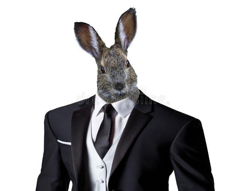 穿着西装的滑稽的复活节兔子,隔绝在白色背景,复活节庆祝概念 库存照片