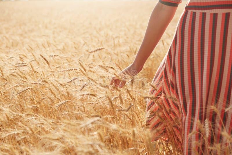 穿被剥离的夏天礼服的未知的妇女接触麦子茎单手,有步行在领域在太阳光芒下,是 库存照片