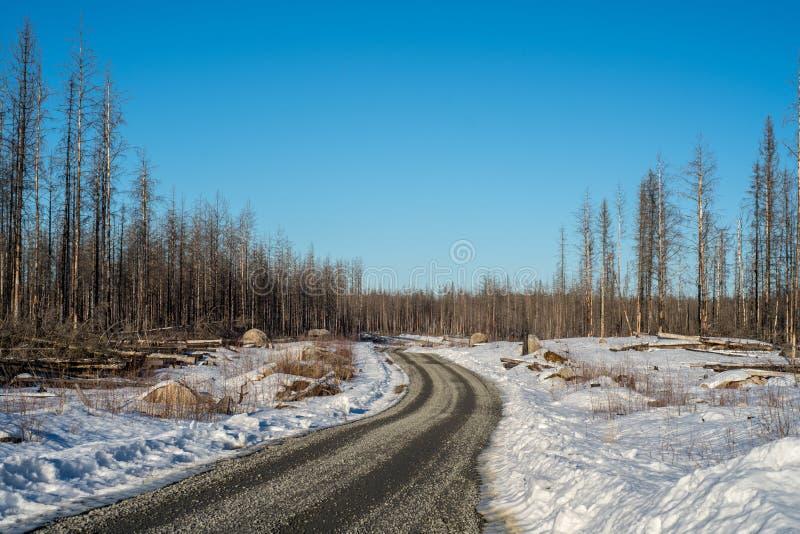 穿过一个死的森林的石渣路 库存图片