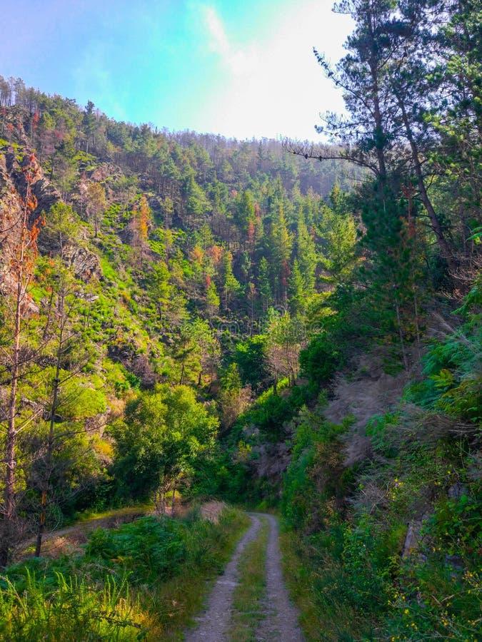 穿过与棕色和绿色树的方式一个谷在山坡o 免版税库存照片