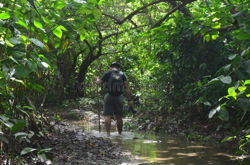 穿过森林用一根木棍子和赤足站立在泥水坑的男性徒步旅行者  免版税图库摄影