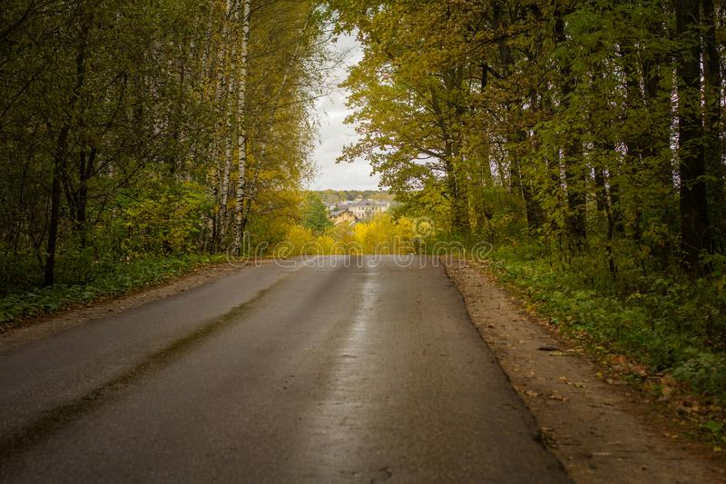 穿过森林的柏油路 免版税库存图片