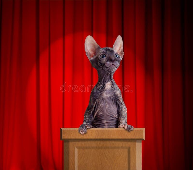 突出在讲台的滑稽的无毛的猫 免版税库存图片
