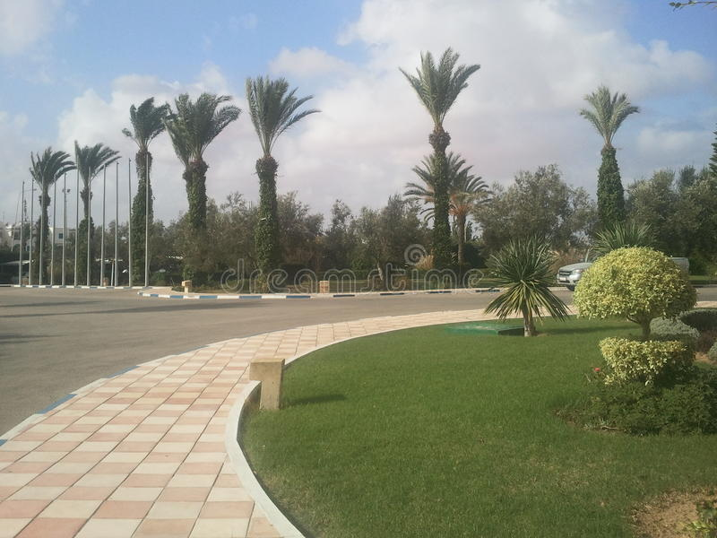 突尼斯的棕榈 库存图片