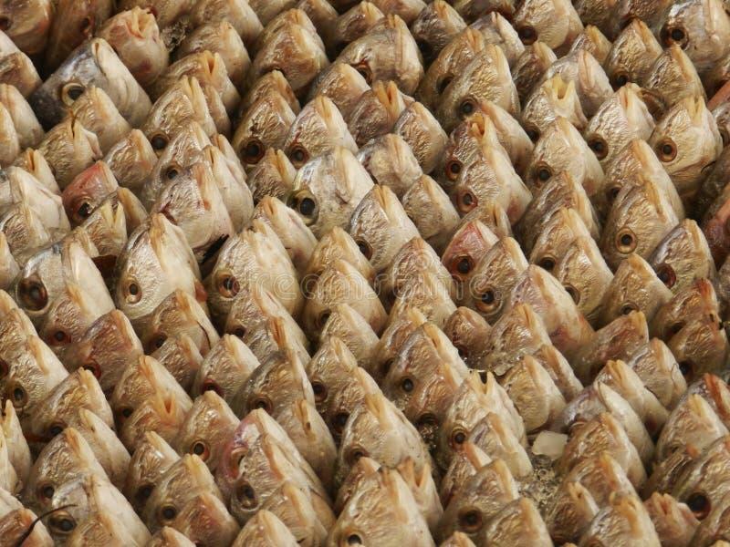 突尼斯鱼市 免版税库存照片