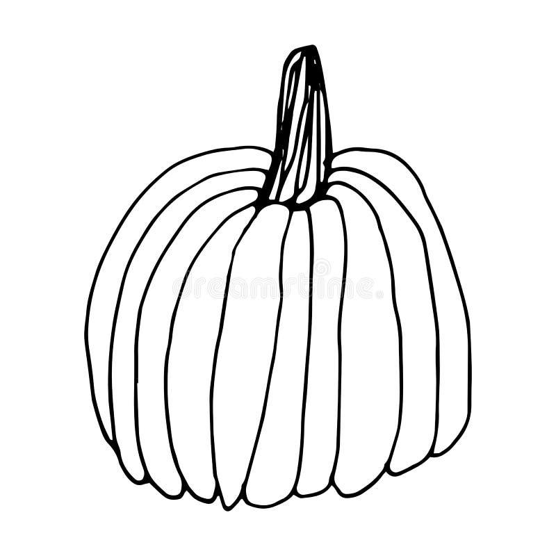 突显白色背景上涂鸦风格的南瓜 感恩节,万圣节南瓜图标 矢量秋插图 库存例证