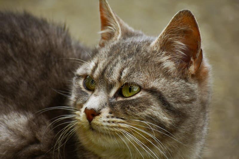 突然的噪声醒来了猫 免版税图库摄影