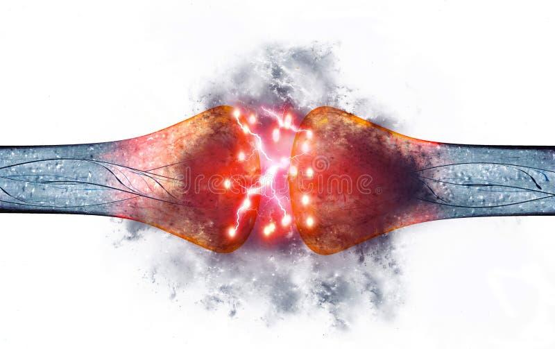 突触是允许神经元或神经细胞通过一个电子或化工信号到另一个神经元或到的结构 库存例证