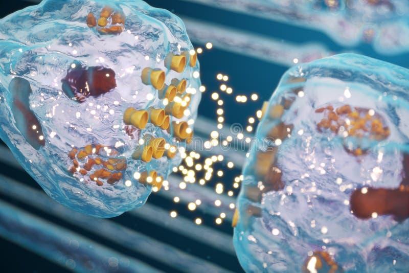 突触神经的传输,人的神经系统 概念知觉 脑子染色体结合 传输突触,信号 库存例证
