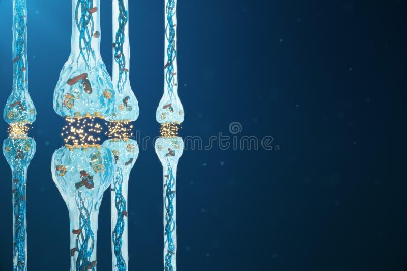 突触神经的传输,神经系统感受器官 概念知觉 脑子染色体结合 传输突触,冲动 向量例证