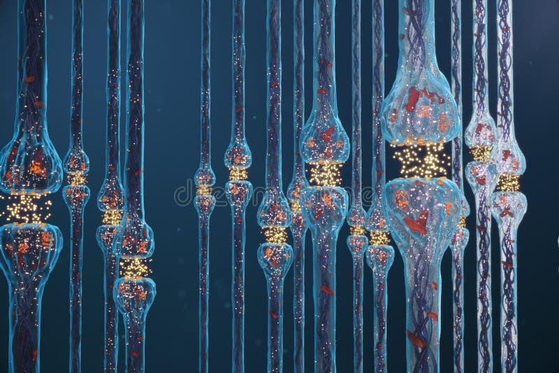 突触神经的传输,神经系统感受器官 概念知觉 脑子染色体结合 传输突触,冲动 皇族释放例证