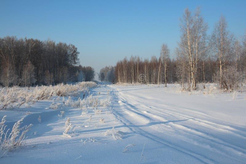 窄路在与雪橇绕踪影的冬天通过森林滑雪轨道在一个清楚的冬日 免版税库存图片