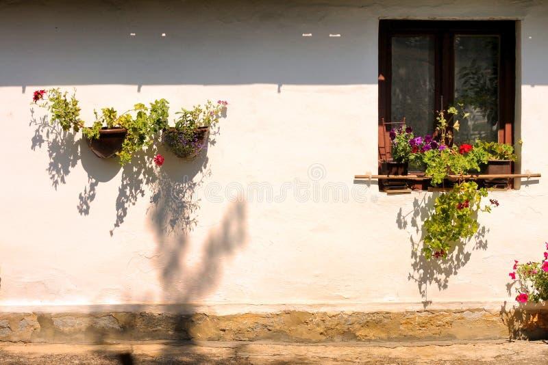 窗口和花 库存图片