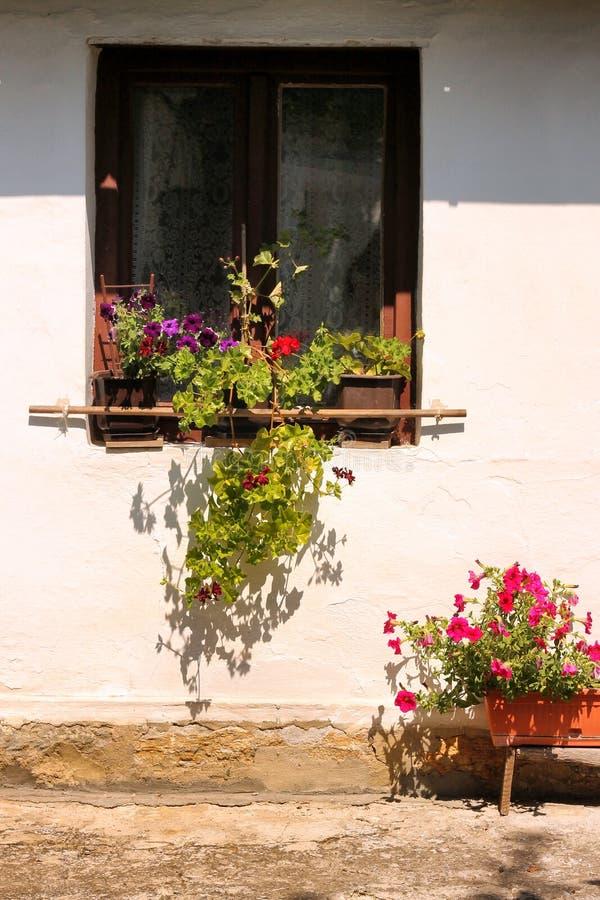窗口和花 免版税库存图片