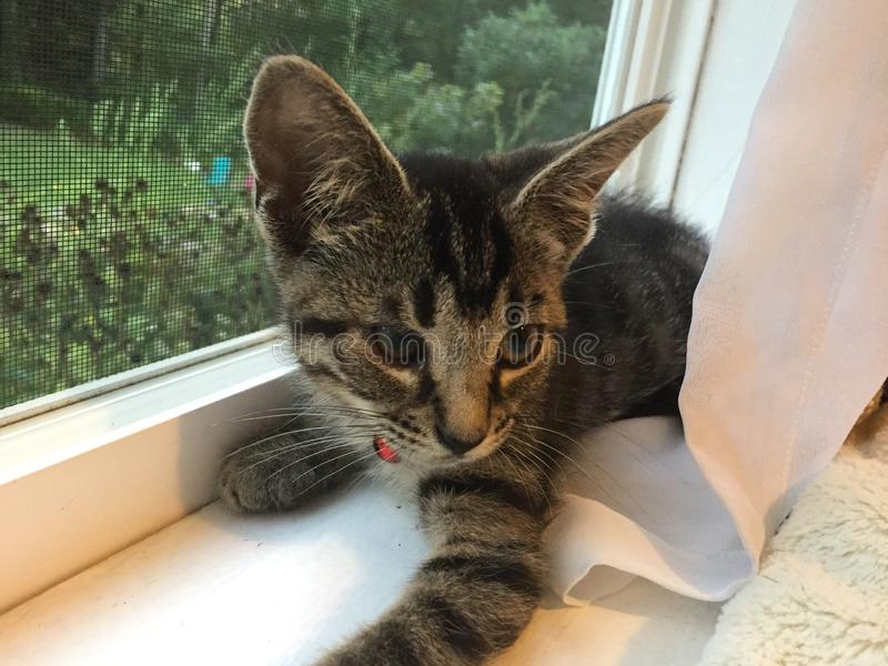 窗口小猫 免版税库存图片