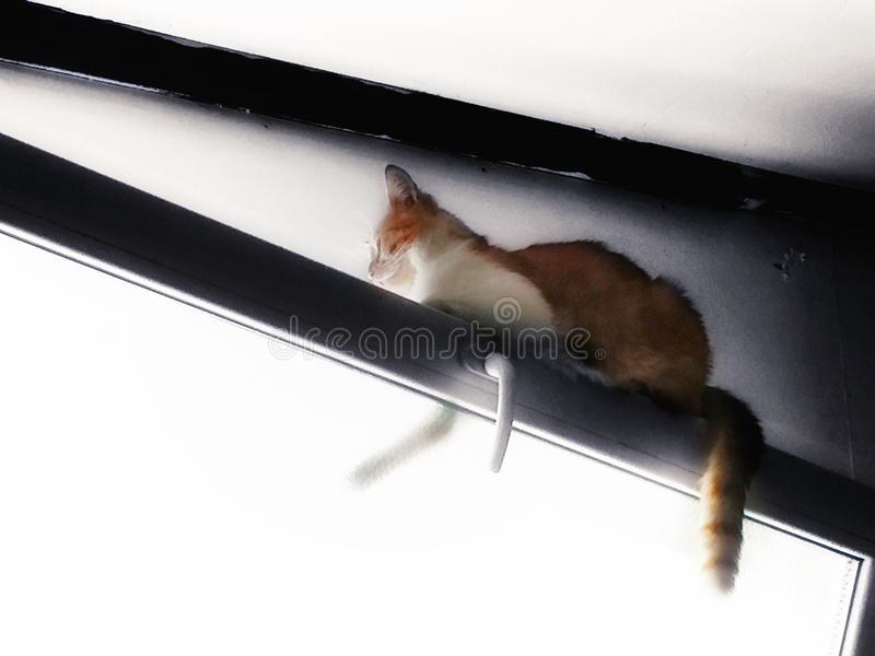 窗口猫 库存照片
