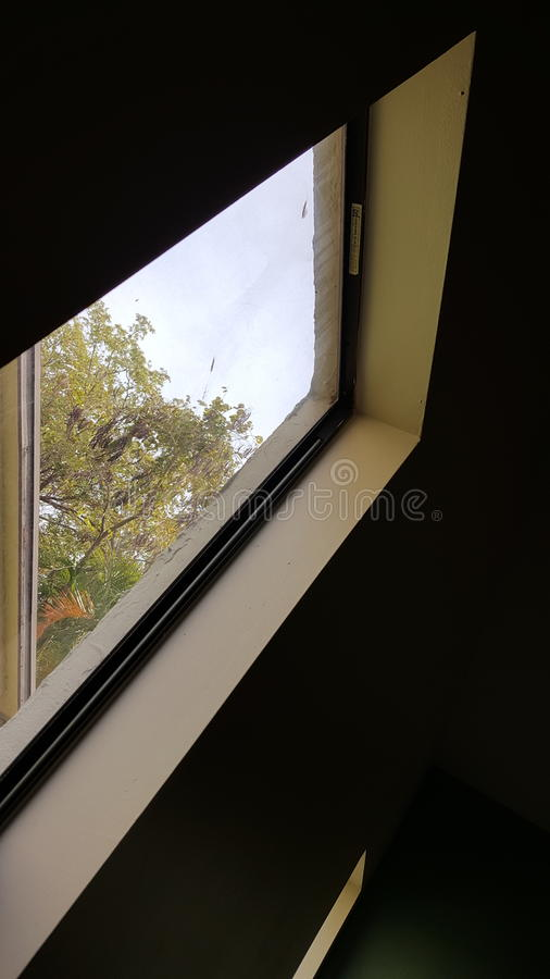从窗口的树 免版税库存照片
