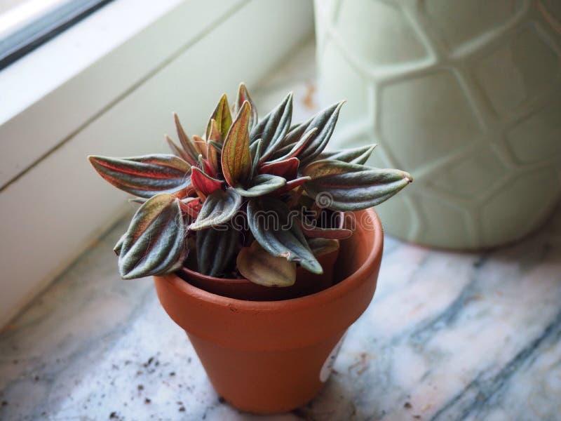 窗口的植物 免版税库存图片