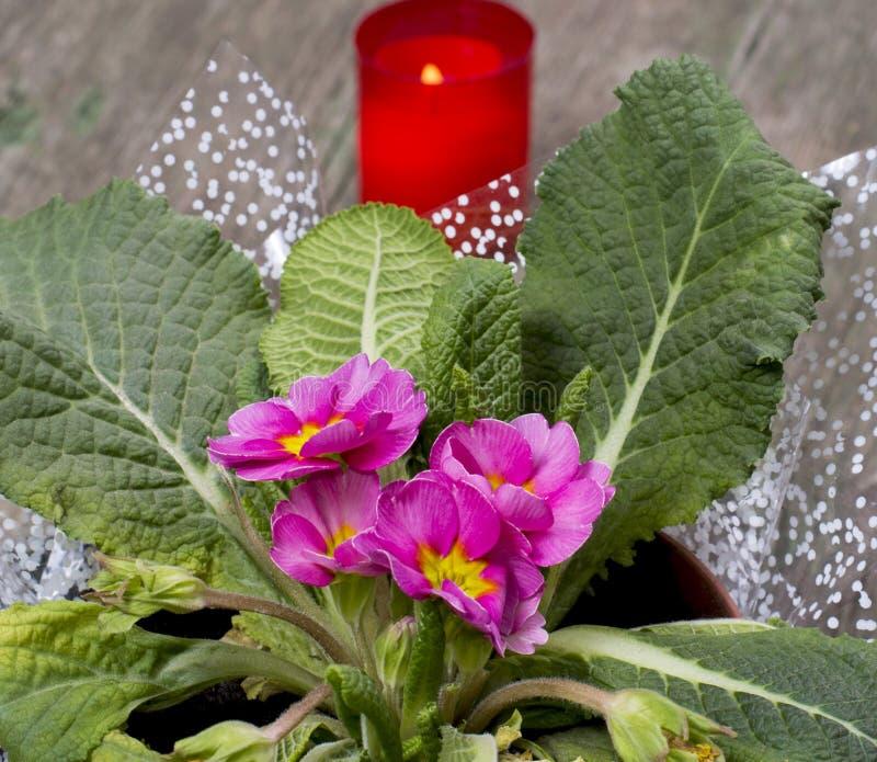 窗口美丽的植物和灼烧的蜡烛 免版税图库摄影