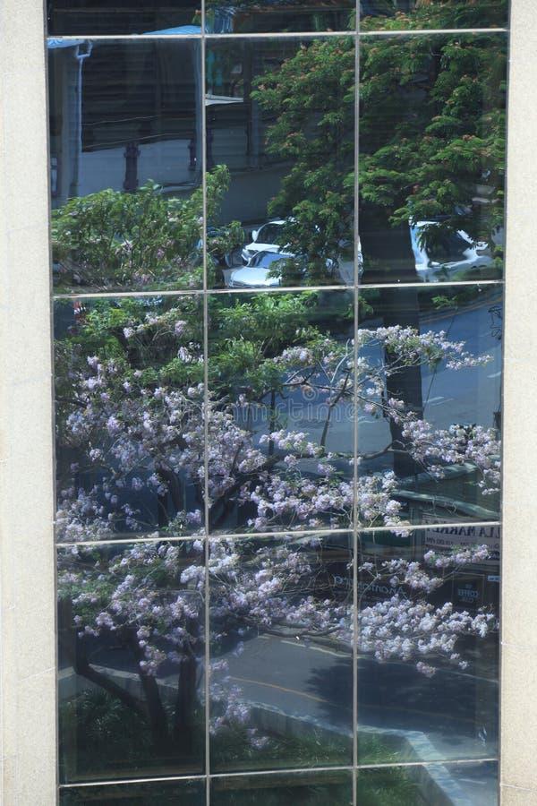 窗口镜子 库存图片