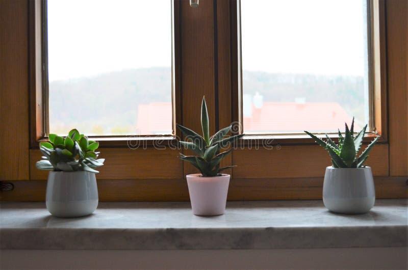 窗台的三棵绿色仙人掌植物连续当卧室的装饰富启示性的想法在家 图库摄影