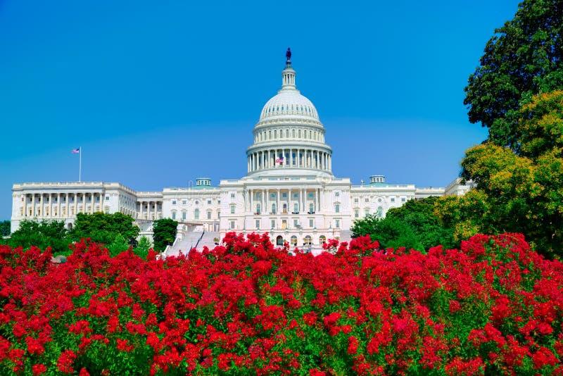 建立华盛顿特区桃红色的国会大厦开花美国 免版税库存照片