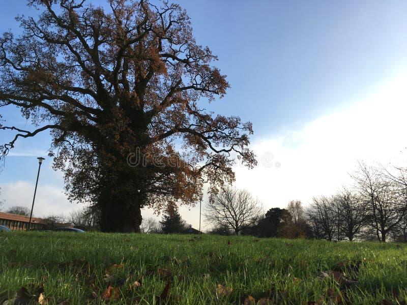 立场单独结构树 库存照片