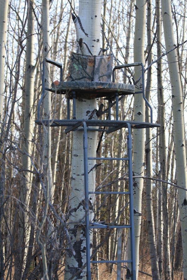 立场结构树 库存图片