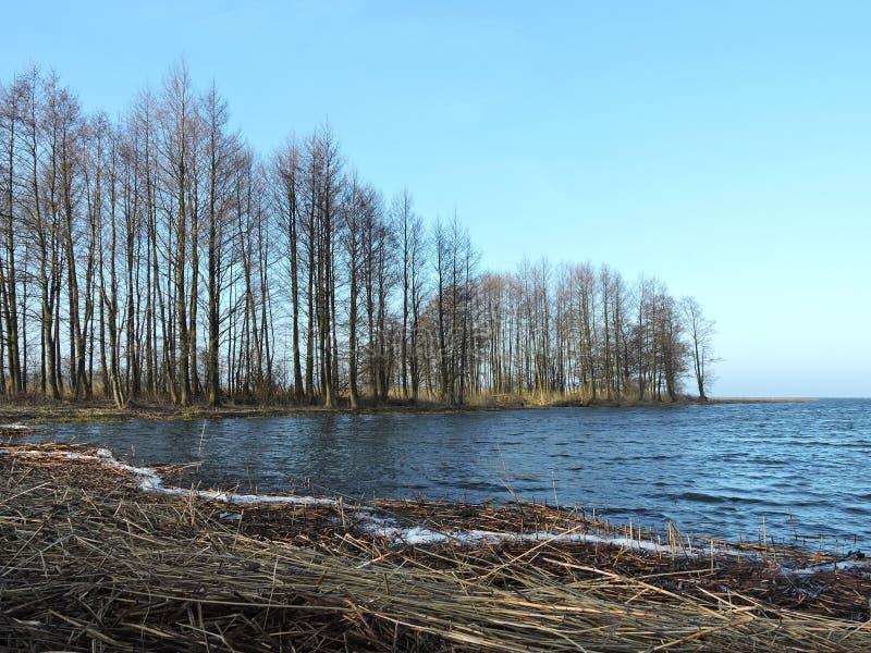 立陶宛春季树木整江 库存图片