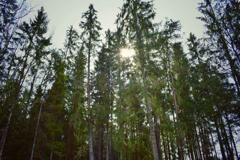 立陶宛自然 库存图片