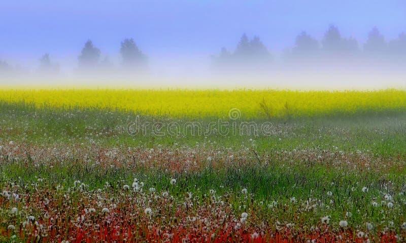 立陶宛,在城市希奥利艾附近的地方 有雾的夏天早晨 库存图片
