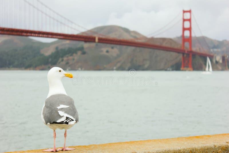 站立与金门桥的海鸥在背景中 免版税库存图片