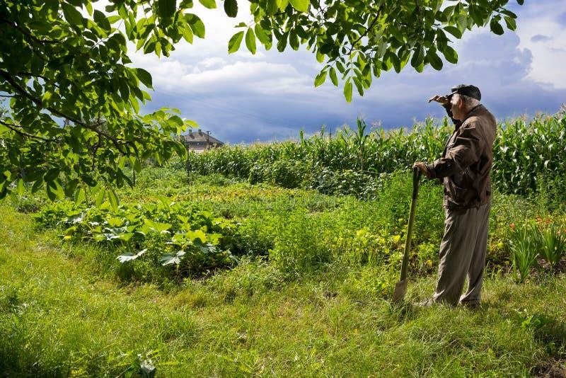 站立与铁锹的农夫 免版税图库摄影