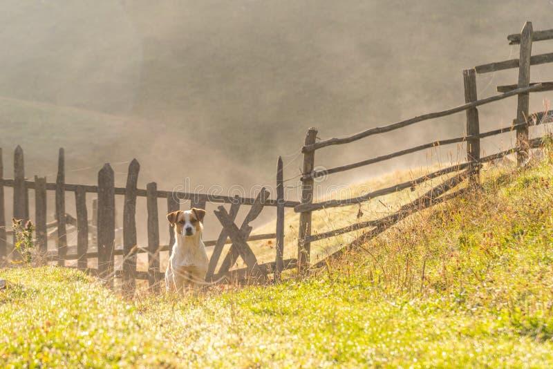 站立和观看在早晨光的美丽的流浪狗 免版税库存照片